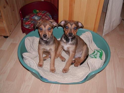 Benji (rechts) heißt Charly und wohnt in der Steiermark