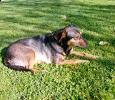 Tilly wohnt in der Steiermark