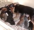 Daisy und die Babies