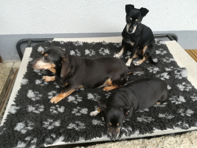 Puppi, Lilly, Kiki